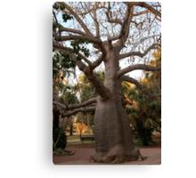 BOAB TREE, Broome Canvas Print