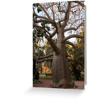 BOAB TREE, Broome Greeting Card