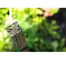 Green, Mossy Stick Photographic Print
