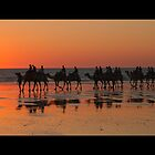 CAMELS AT SUNSET , BROOME . W.A by Pauline Tims