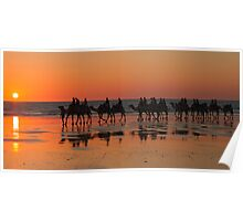 Camels at Sunset, Broome, W.A Poster