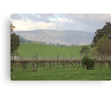 Vineyard in the Valley Canvas Print