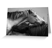 Ponies Black and White Greeting Card