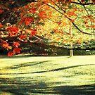 Autumn Light 2 by Ellen Cotton