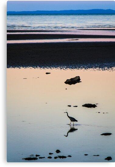 Heron at Dusk by Silken Photography