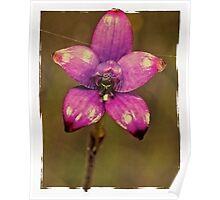 Purple Enamel Orchid Poster