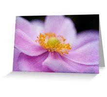 Pink Anemone Macro Greeting Card