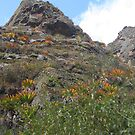 Inca Trail - Beautiful plants, flowers everywhere by Torchwood