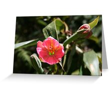 Inca Trail - Flowers abound Greeting Card