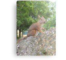 Hi There (Wild squirrel) Metal Print