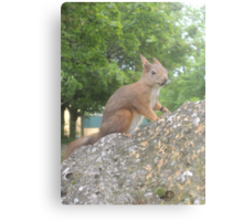 Hi There (Wild squirrel) Canvas Print
