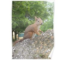 Hi There (Wild squirrel) Poster