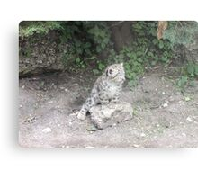 One day I'll be bigger than this rock... Metal Print