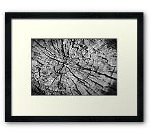 Old Texture Stump Framed Print