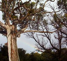 Hidden Rainbow by Robert Phillips