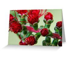 Macro Garden Greeting Card