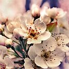 Blossoms at Dusk  by micklyn