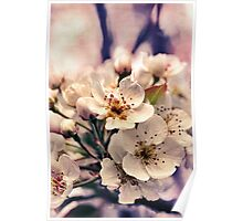 Blossoms at Dusk  Poster