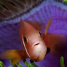 Anemone Fish in Anemone by Jamie Kiddle