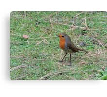 Robin Profile Canvas Print
