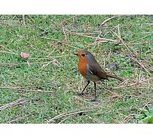 Robin Profile Photographic Print
