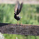 Taking Flight! by Kymbo