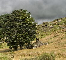 Ruined shepherd's hut under a tree by Judi Lion