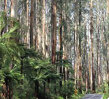 The Black Spur by Kymbo