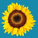 Sunflowers III by Mark Podger