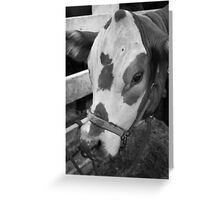 B/W Cow Greeting Card