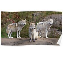 The Three - Parc Omega Poster