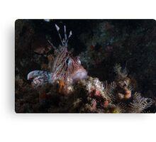 Lionfish Den Canvas Print
