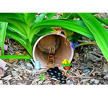 Fairy House in the Garden Photographic Print