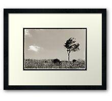 Sugar cane field Ubud Bali Framed Print