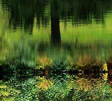 Black Forest by Angelika  Vogel