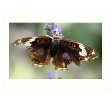 Withered Butterfly Art Print