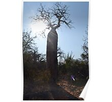 Baobab Silhouette Poster