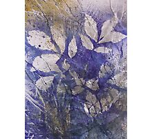 Shagbark and Wild Grape Sweetness Photographic Print
