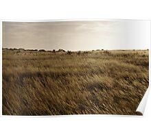 Nullarbor Grass Poster