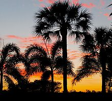 Florida Sunset by Celia G