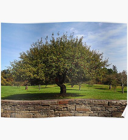 The Apple Tree Poster