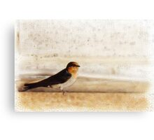 Winter Swallow Canvas Print