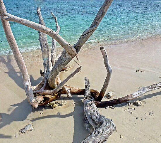 drift wood by globeboater