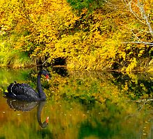 Pianissimo a Quiet Autumn Scene by Diane Schuster