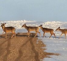 Five Deer - One Road by Kim Taylor