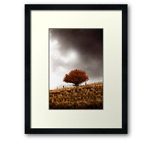 The Lone Red Tree Framed Print