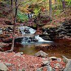 Waters Meet Fall Leaves by Gene Walls