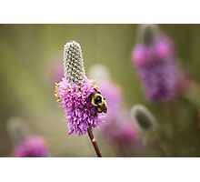 Bee and Reverie Photographic Print