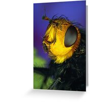 Yellow Faced Fly Greeting Card