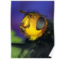 Yellow Faced Fly Poster